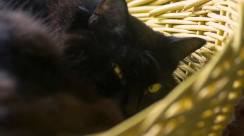 Basil in a basket.