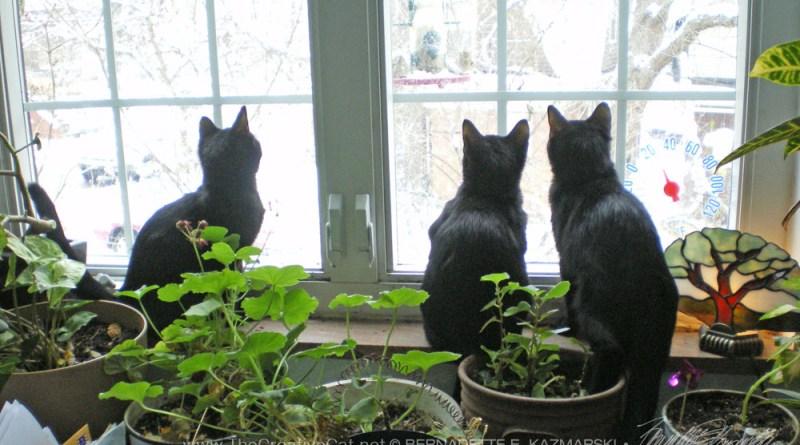 three black kittens