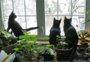 three black kittens