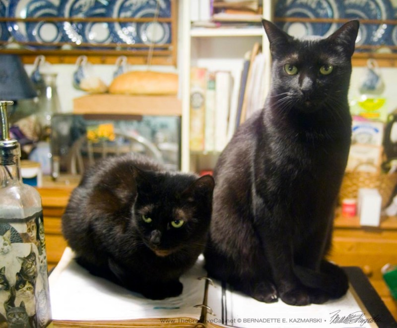 Mimi and Giuseppe hold my cookbook hostage. TWO BLACK CATS