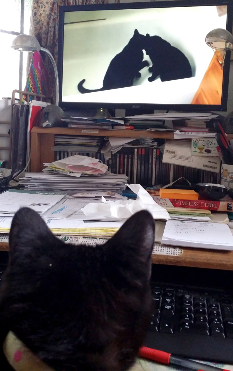 cat watching cats in video