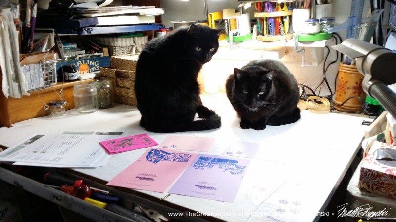 Wow, look at that! two black cats