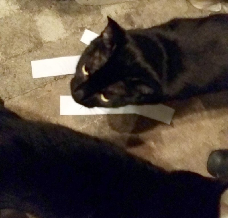 two black cats with papers