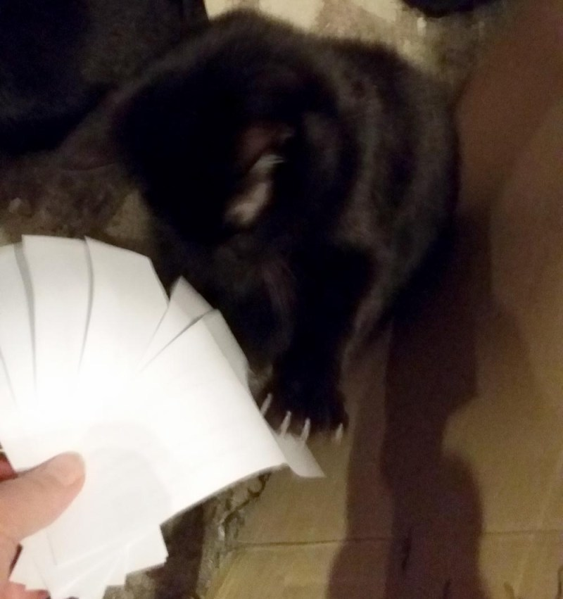 black cat with papers