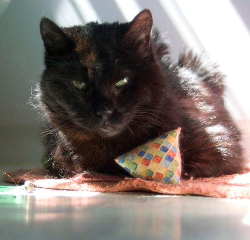 black cat with catnip toy