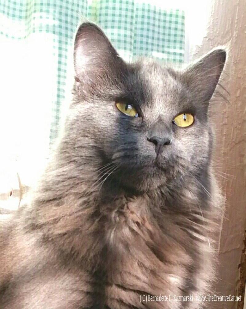 Ophelia looking pensive.