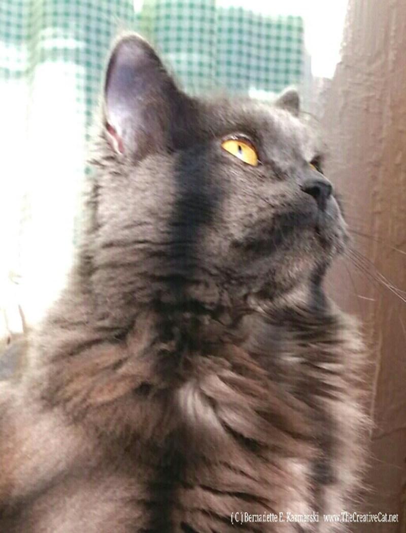 Ophelia in profile.