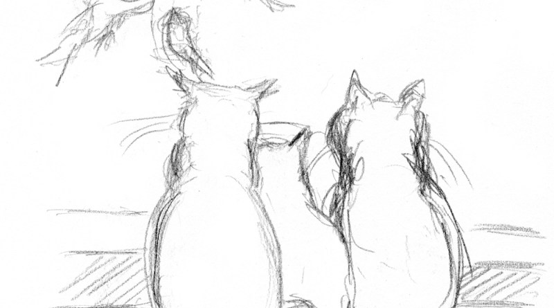 pencil sketch of three cats watching birds