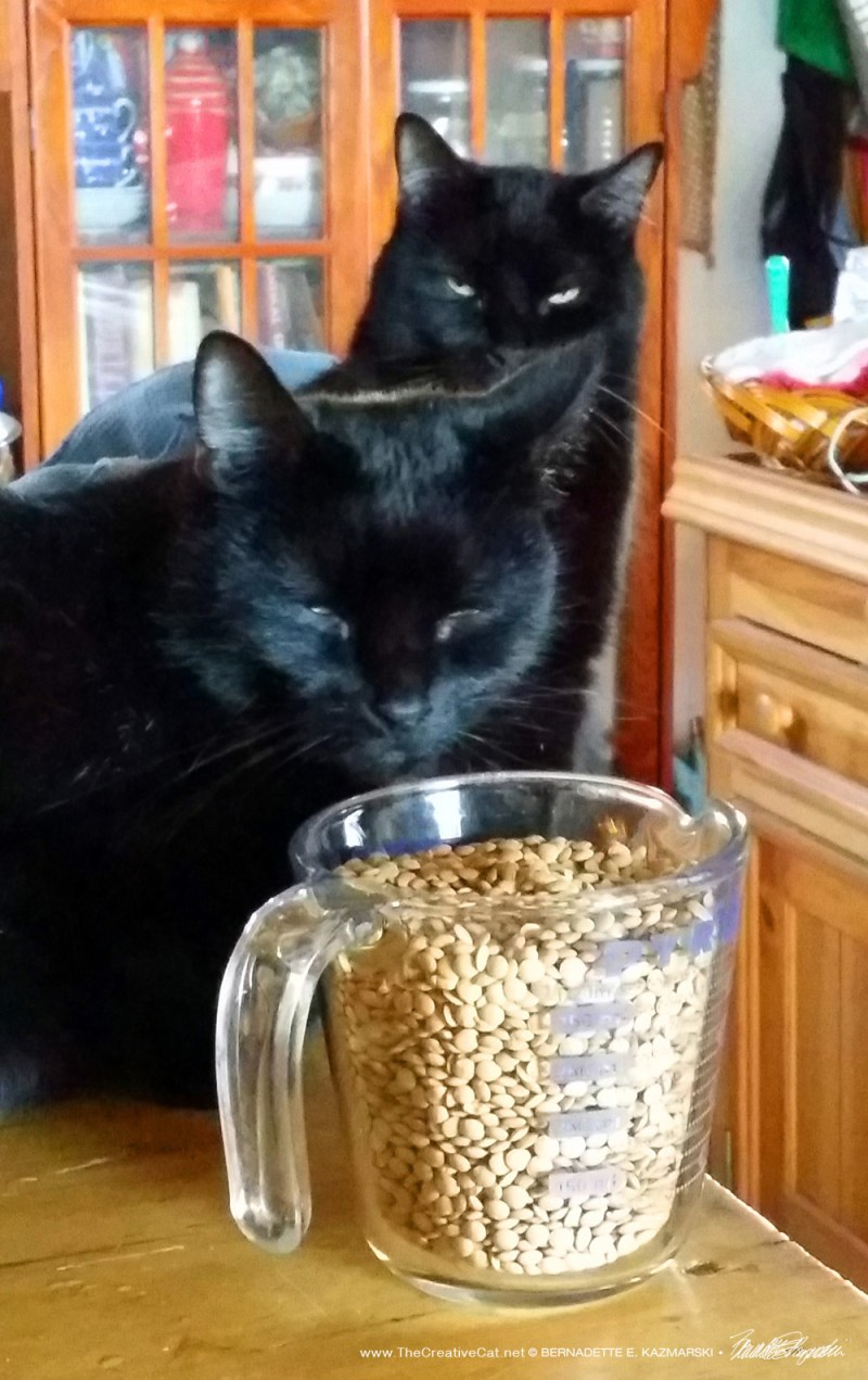 Sunshine and Mewsette make a point about lentils.