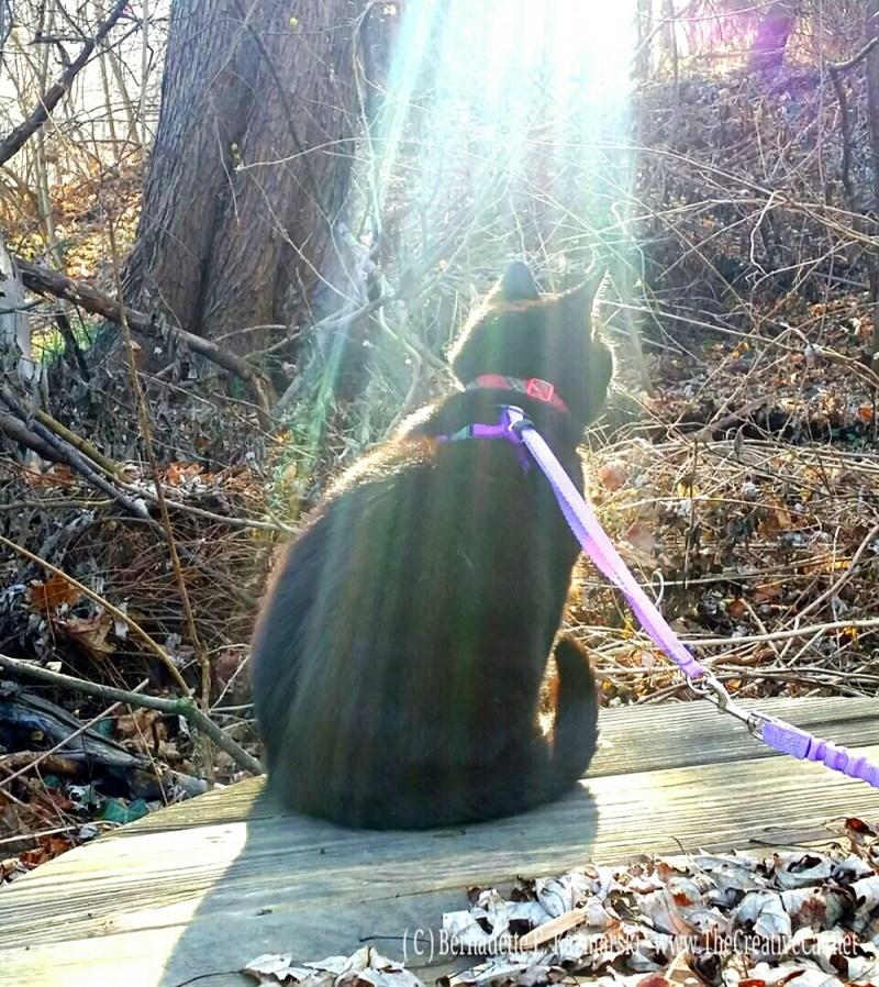 Mimi aglow. black cat in sun on picnic table