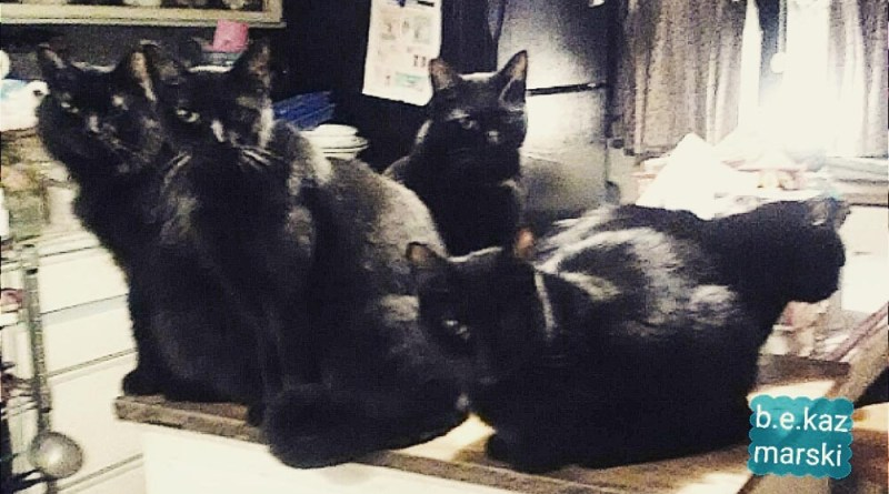 five black cats in the kitchen