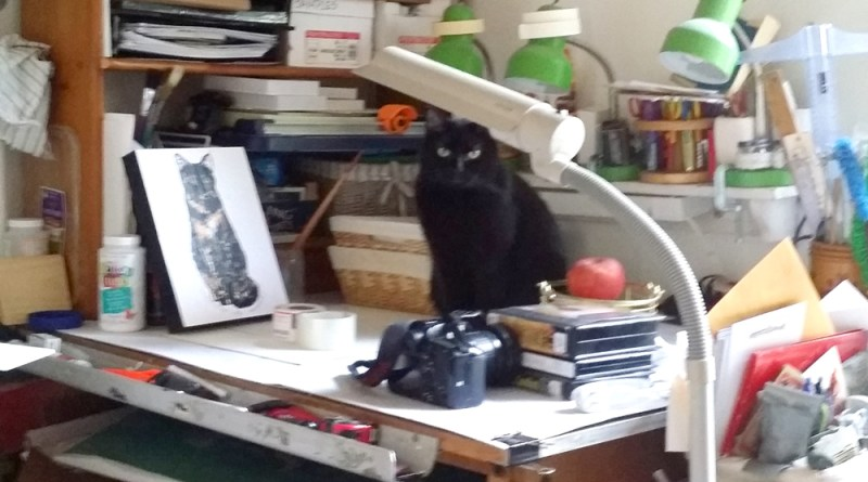 black cat on worktable