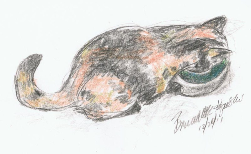 pencil and colored pencil sketch of tortoiseshell cat drinking