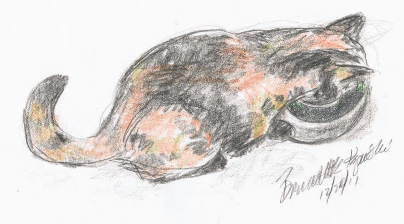 graphite an doclored pencil sketch of tortoiseshell cat drinking