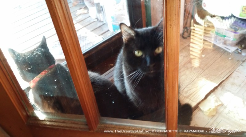 Mewsette asks me to let her in.