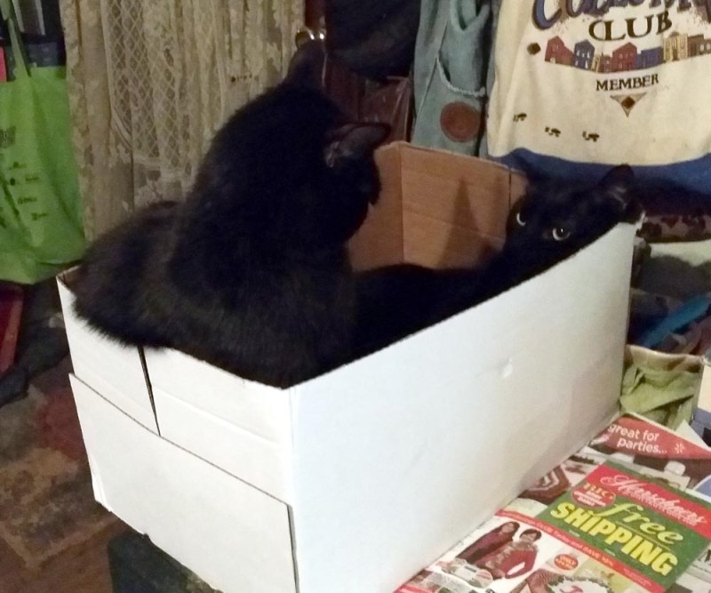 two black cats and box