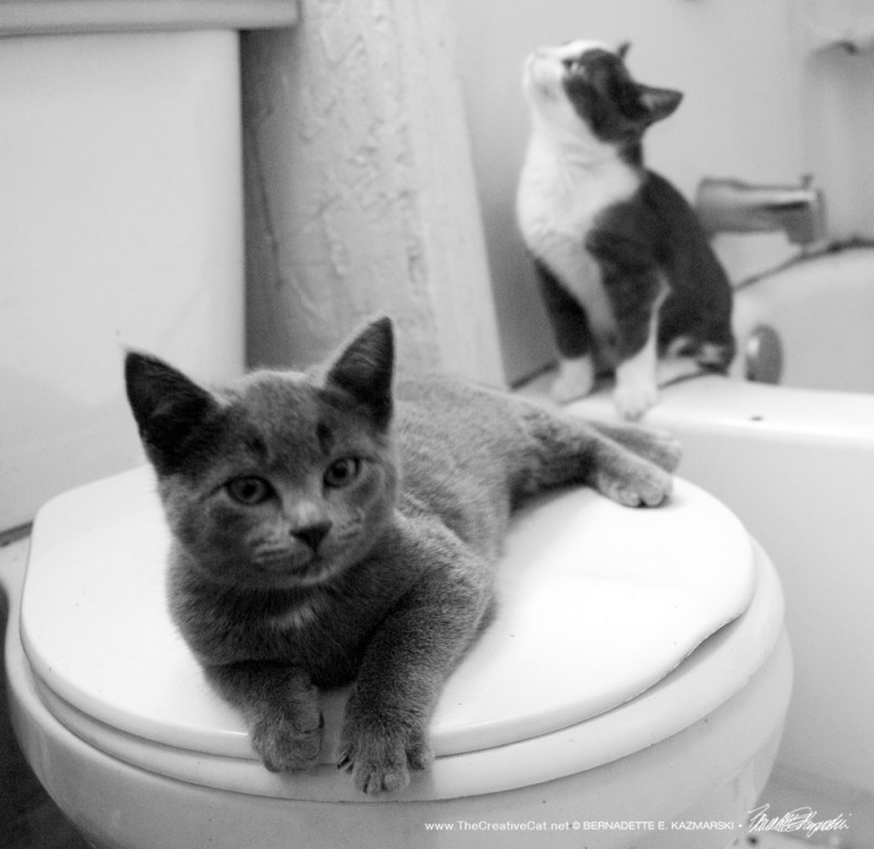 Jack and Diane, two American kittens doin' the best they can.