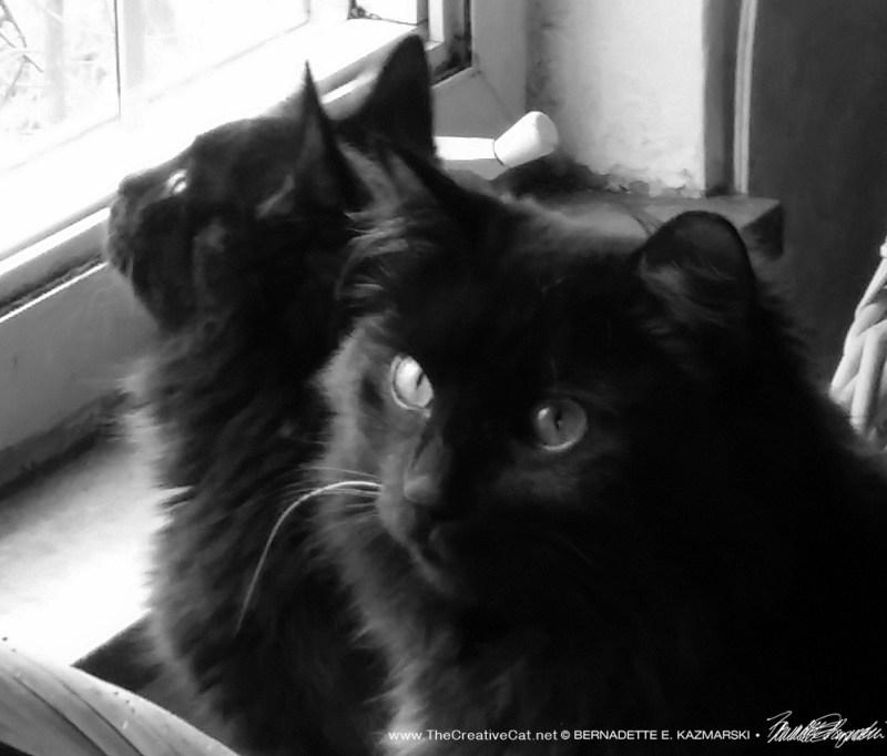 Basil checks the front window.