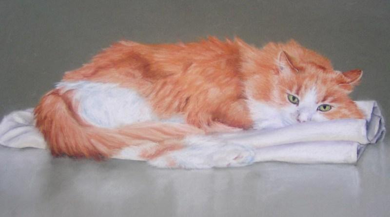 portrait of orange and white cat