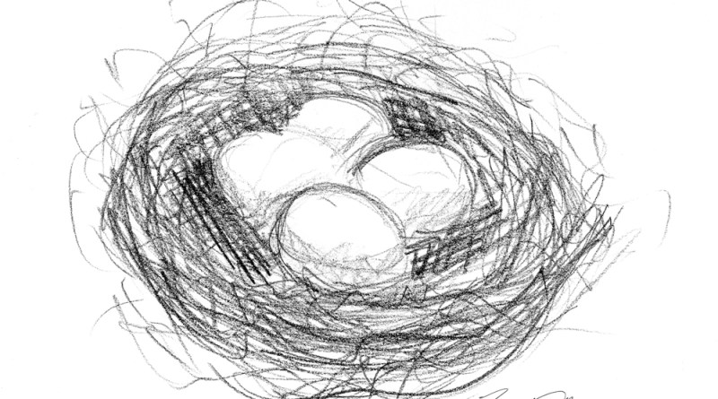 pencil sketch of bird's nest