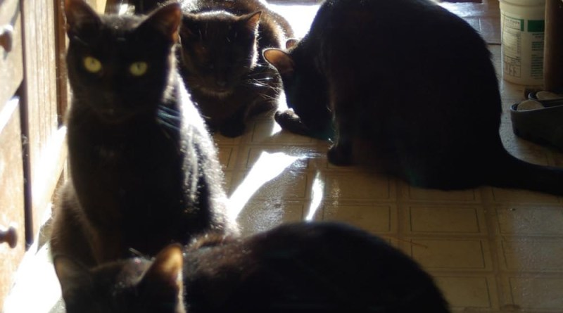 photo of six cats in sun