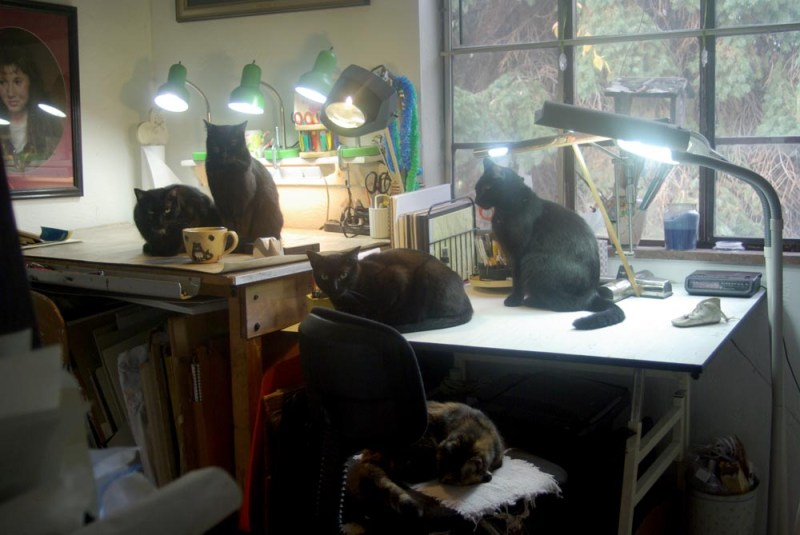 five cats in studio