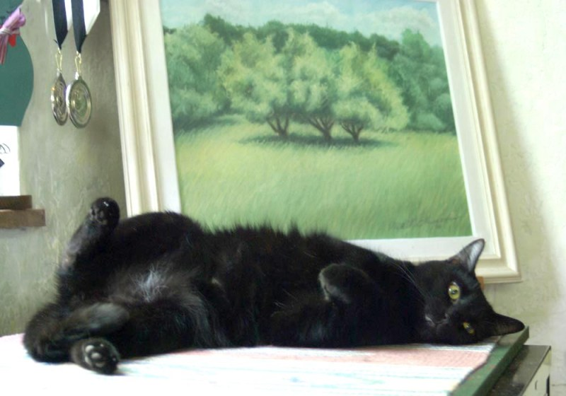 black cat lyin gon side in front of painting