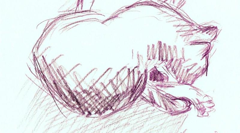 sketch of cat bathing
