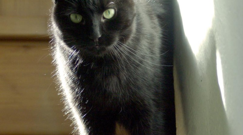black cat at top of stairs