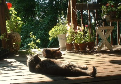 two cats on a sunny deck with flowers