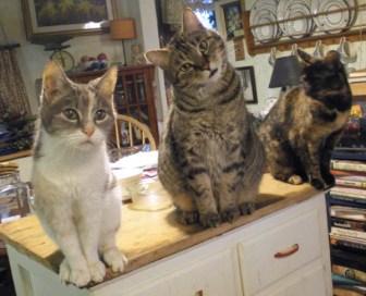 three cats on cabinet