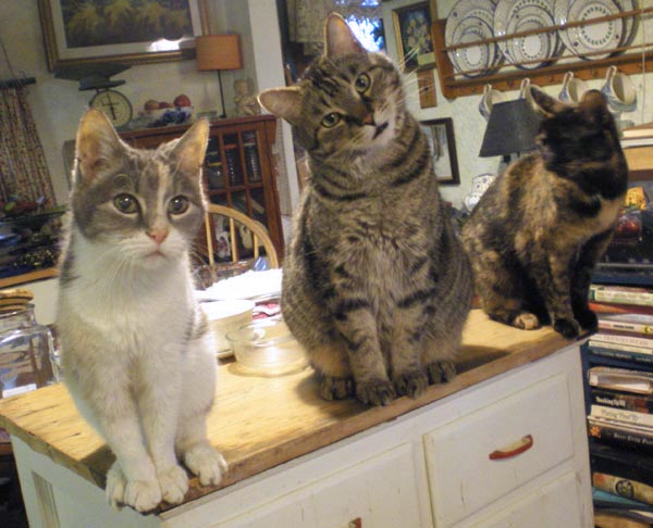 three cats on cabinet