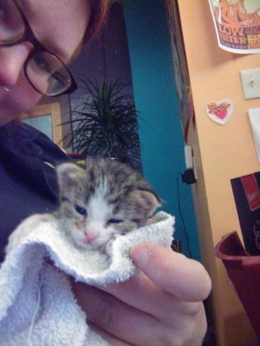 tabby kitten in towwl