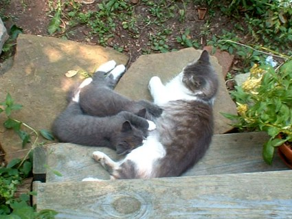 stray cat nursing kittens outdoors