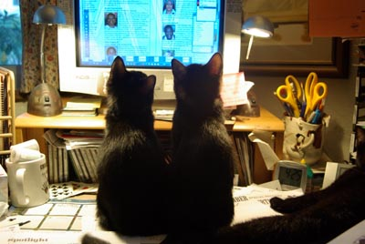 two little black cats looking at computer