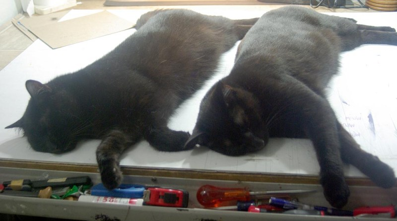 two black cats sleeping on table