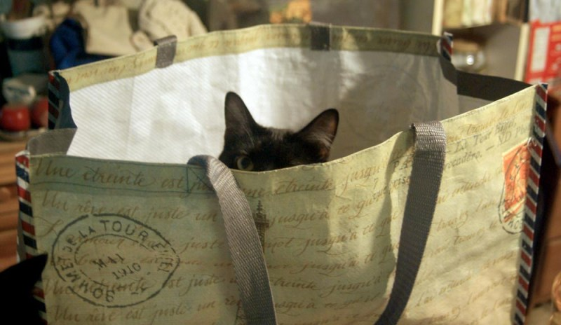 black cat in bag
