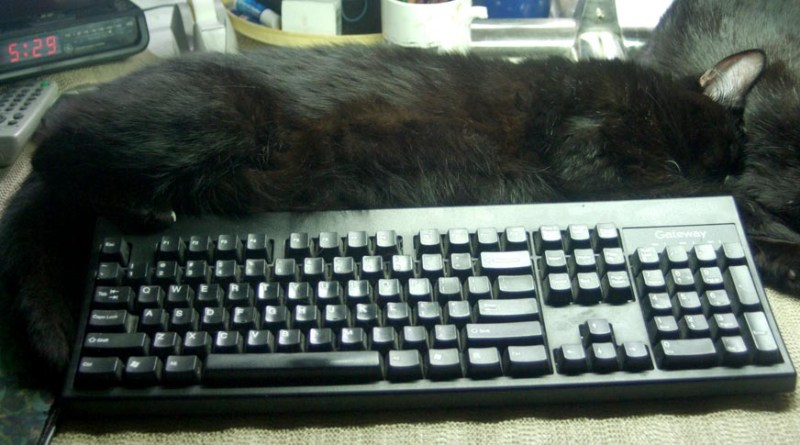 black cat wrapped around computer keyboard