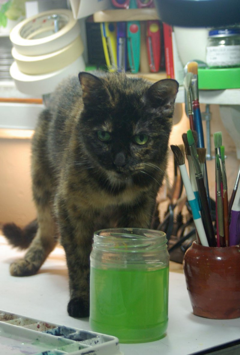 totoiseshell cat looking up over jar of green water