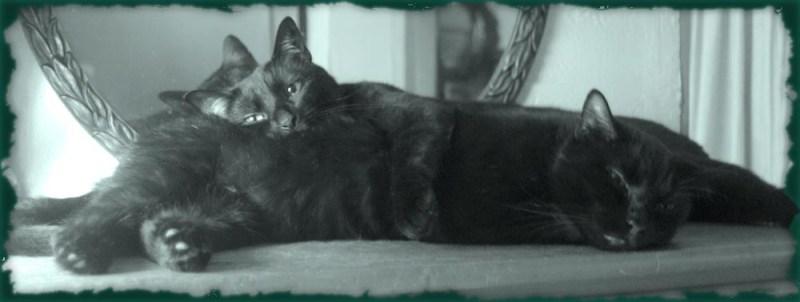 monochrome photo of two black cats cuddling