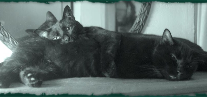 monochrome photo of two black cats cuddling