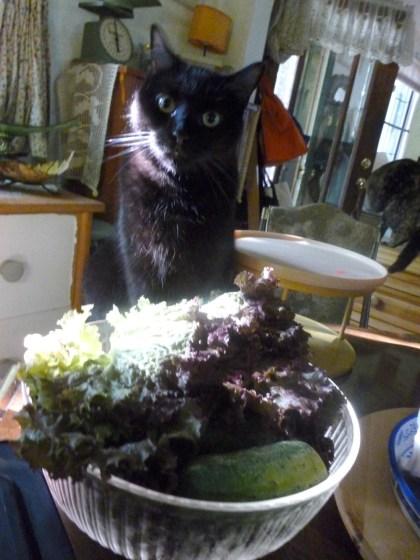 black cat with lettuce