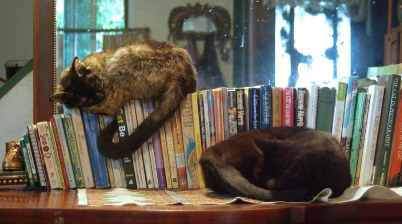 two cats on cat books