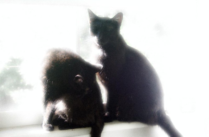 photo of two black cats with glow applied