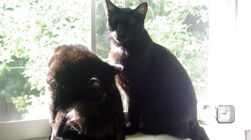 two black cats on sunny windowsill