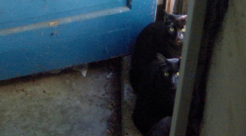 black cats and blue door