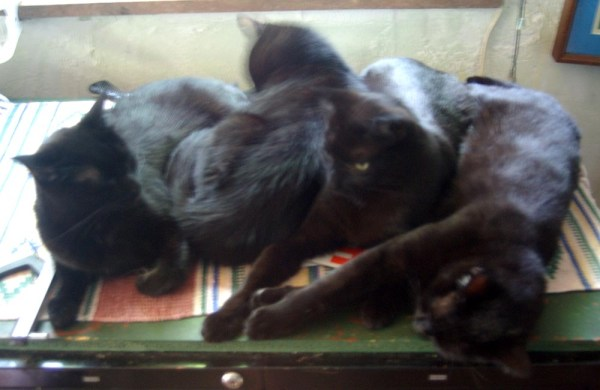 four black cats cuddling
