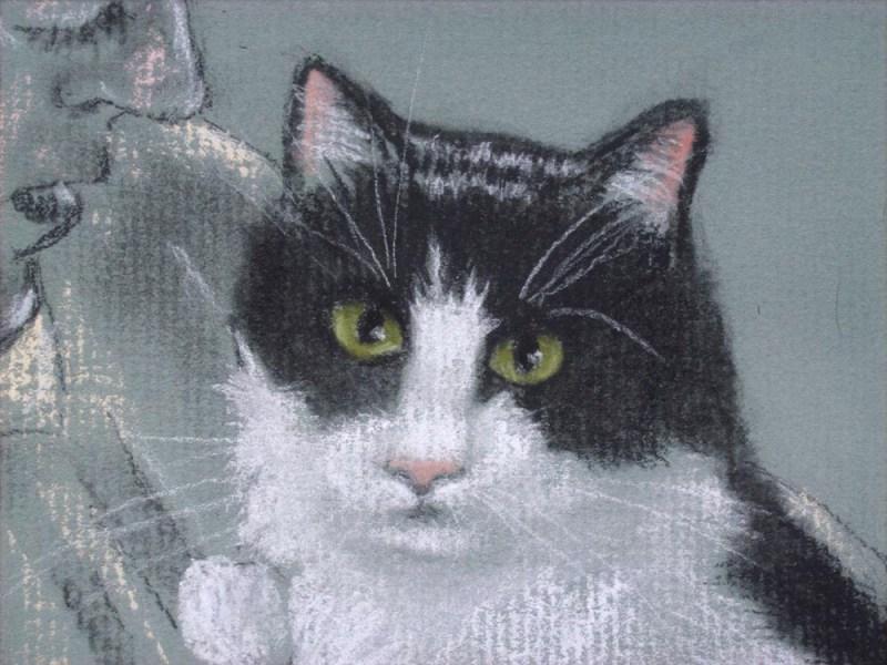 Detail of tuxedo cat face