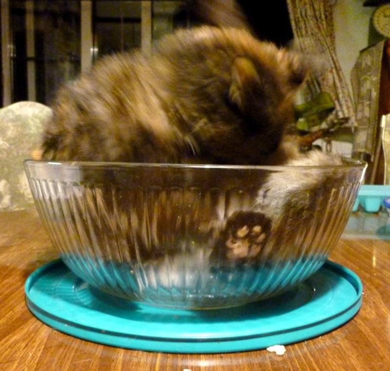 tortoiseshell cat bathing in bowl