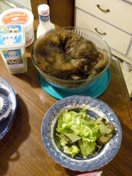 tortoiseshell cat in salad bowl